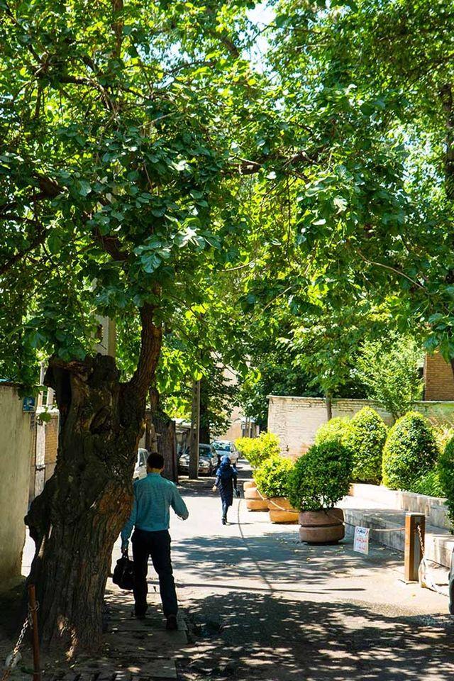 ده ونک، محله ای قدیمی در دل مدرنیته تهران