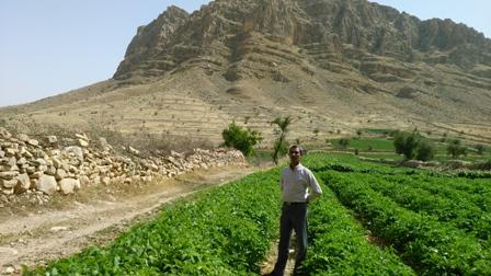 کشاورزی روستای هلک