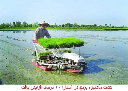 کشت مکانیزه برنج در آستارا ۱۰ درصد افزایش یافت